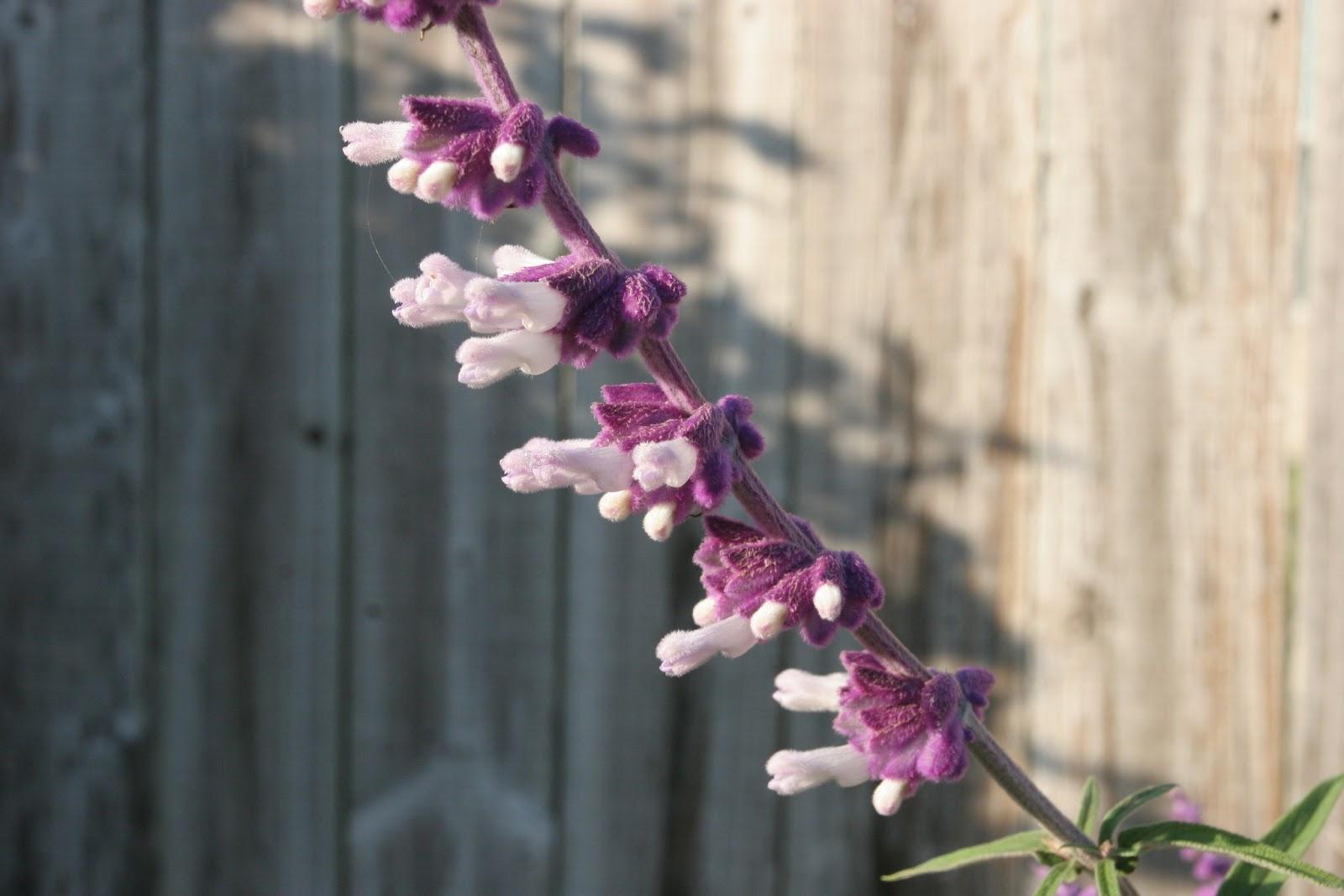 Gardening 2012 - IMG_2858.JPG