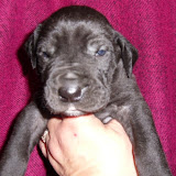 Pam's solid black girl @ 3 weeks