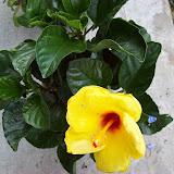 Gardening 2009 - 101_4617.JPG