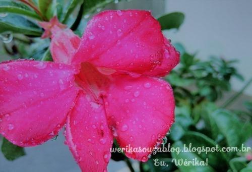 flor na chuva_thumb[12]
