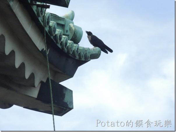 名古屋城上的烏鴉