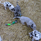 Thelma & Garths 3/21/12 litter - SAM_3271.JPG