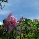 Gardening 2015 - 116_9394.JPG
