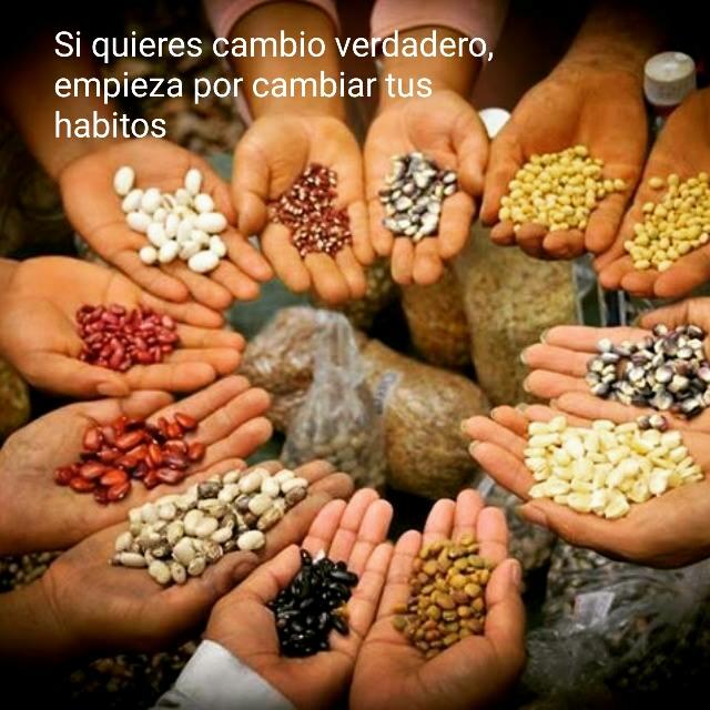 manos sosteniendo semillas, representando voluntariado en ecoaldeas