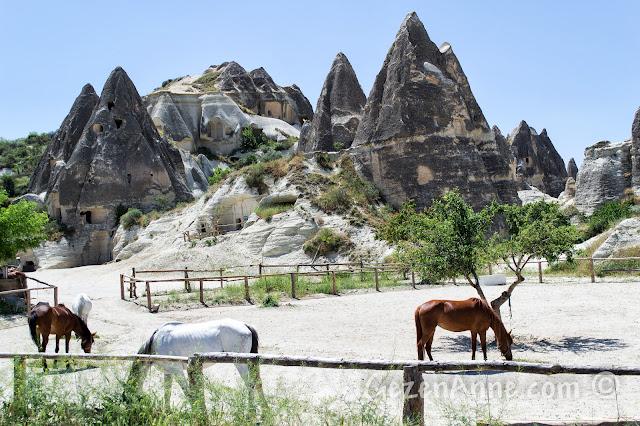 Güzel atlar ülkesi Kapadokya'da