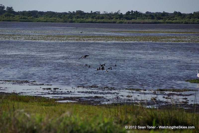 04-06-12 Myaka River State Park - IMGP4454.JPG
