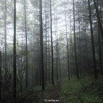 长江神农架:迷途知返 photos, pictures