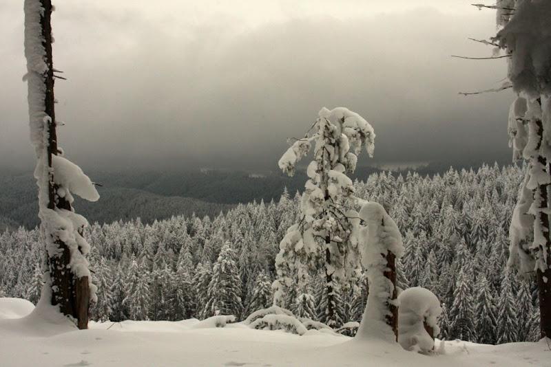 zapada schi de tura Valea Azugii Predeal Azuga brazi munte