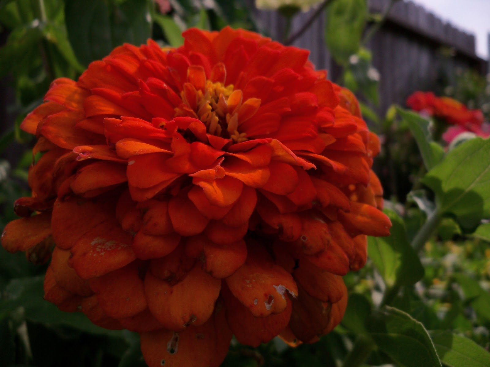 Gardening 2011 - 100_8625.JPG