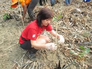 Errickson Mangrove Tree Planting at Sabak Bernam (CrE)