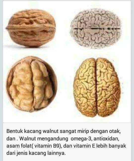 Wordless Wednesday | Kacang Yang Menyerupai Bentuk Otak