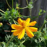 Gardening 2011 - 100_0077.JPG