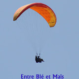 2011 07 03 Treuil entre Blé et Maïs !