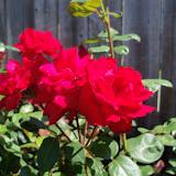 Gardening 2011 - 100_9162.JPG
