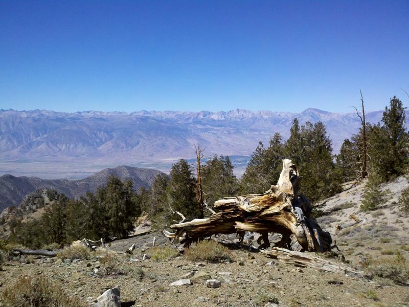 White Mountain Peak • Sierra Nevada