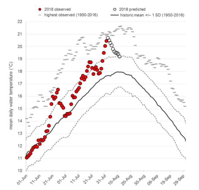 Fraser River water temperatures near Hope, B.C., as of 2 August 2018, with 2018 marked in red. Anything above 18 C is hard on migrating fish, and water warmer than 20 C is associated with high pre-spawn mortality. Graphic: Fisheries and Oceans Canada