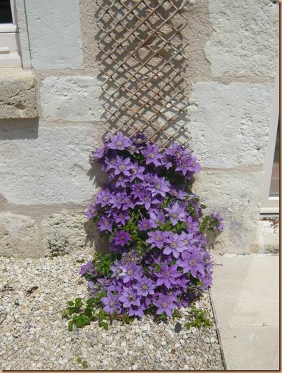 Spring flowers9v