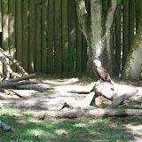 04-07-12 Homosassa Springs State Park - IMGP0059.JPG