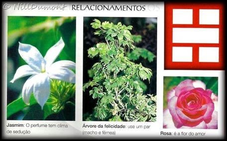 O-baguá-e-as-plantas-08