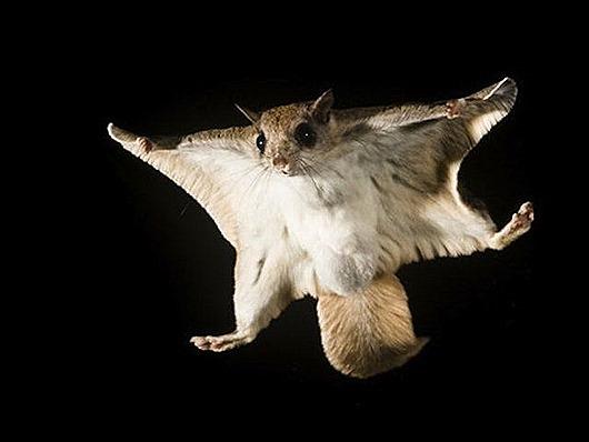 belka-letyaga