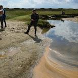de Slufter National Park on Texel in Texel, Noord Holland, Netherlands