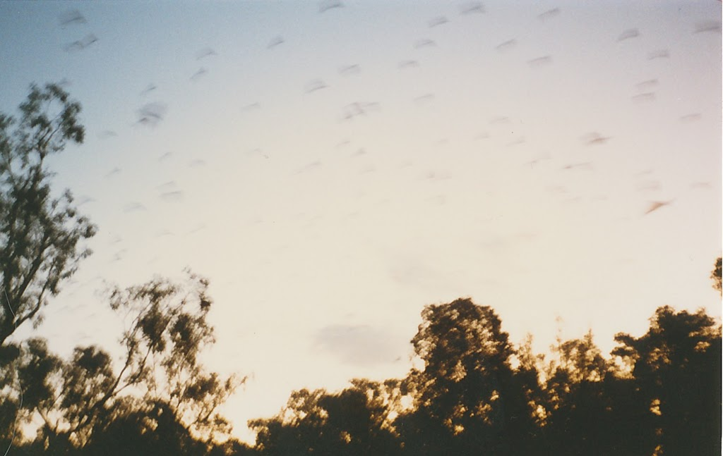 1010Katherine - Beware the Bats!
