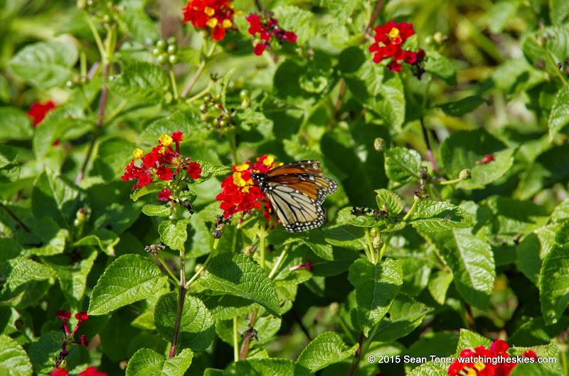 10-26-14 Dallas Arboretum - _IGP4324.JPG