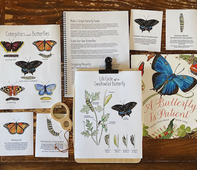 life cycle of butterfly download