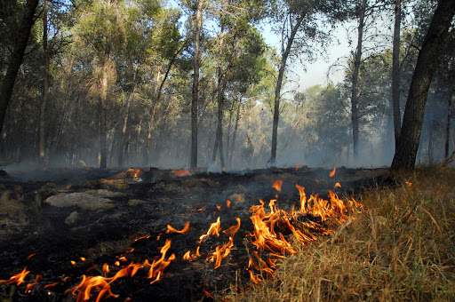 KIRYAT GAT , ISR - APR 23:Large wildfire on April 23 2008.More than 80 percent of all wildfires are started by humans.