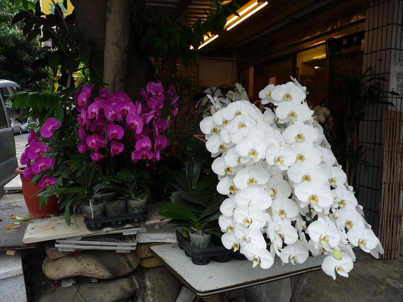 TAIWAN.Taipei - P1110327.JPG