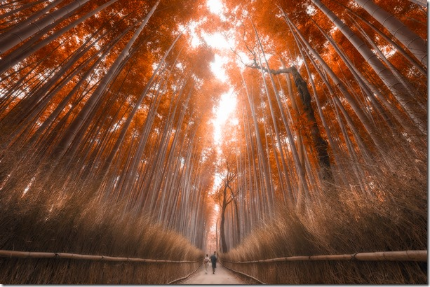 Autumn-bamboo-forest51
