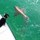 D's First Shark 003.jpg