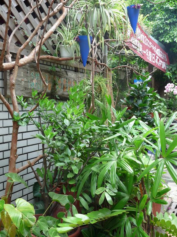 TAIWAN.Taipei - P1110324.JPG