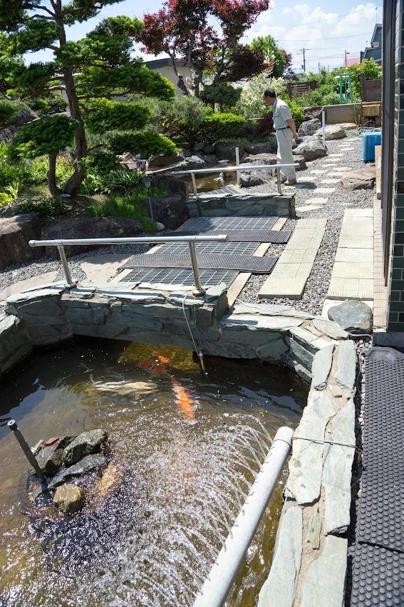道を挟んで行き来できる鯉の池