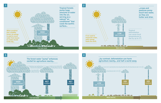 Illustration showing how forests enhance rainfall. Graphic: Climate and Land Use Alliance