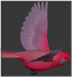 palomas (4)