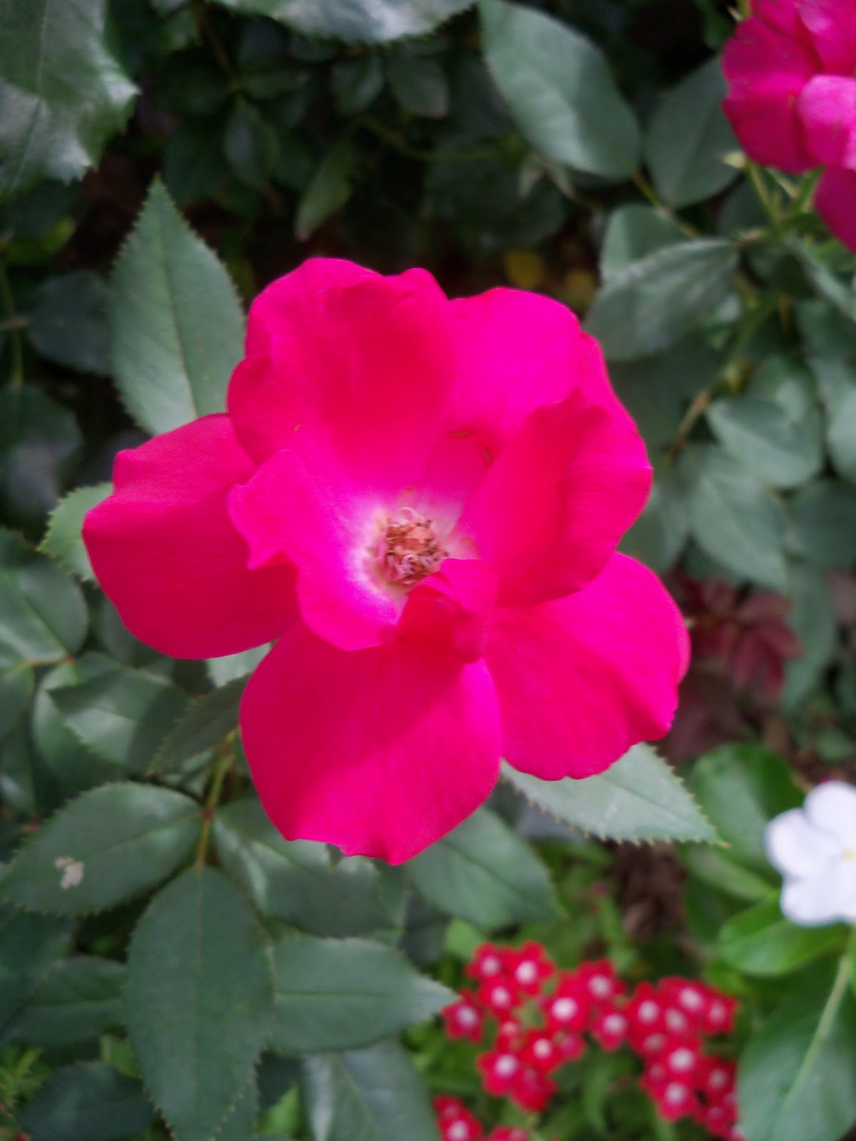 Gardening 2010, Part Three - 101_3814.JPG