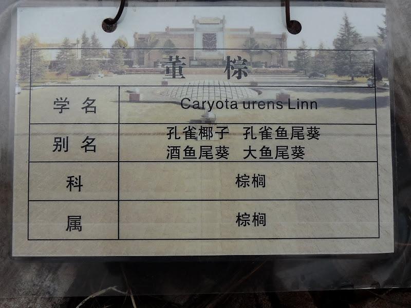 CHINE.YUNNAN.KUN MING Temple, jardin horticole,Musée des minorites - P1270403.JPG