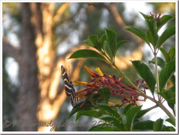 06-06-zebrajpg