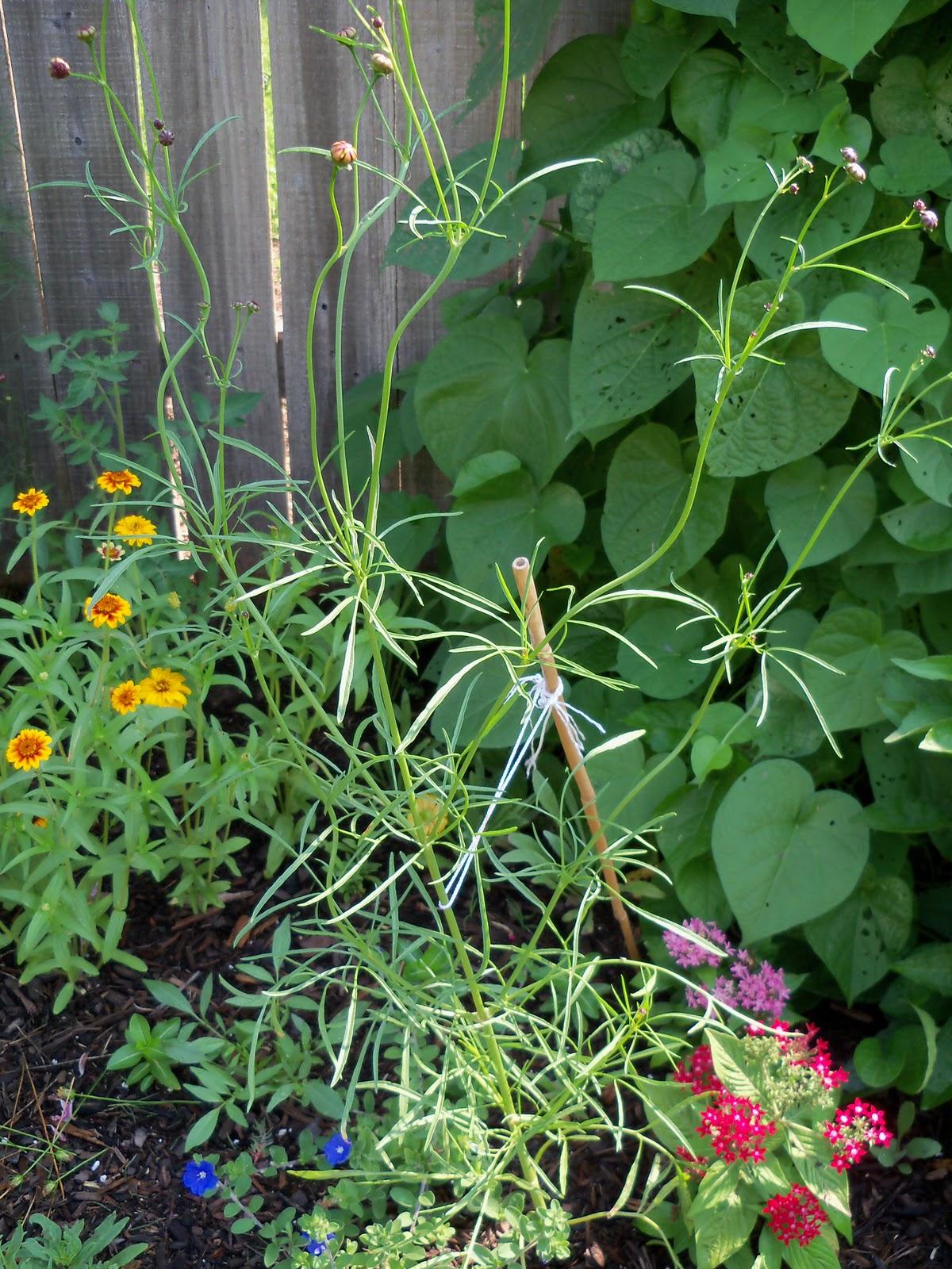 Gardening 2010, Part Two - 101_3343.JPG