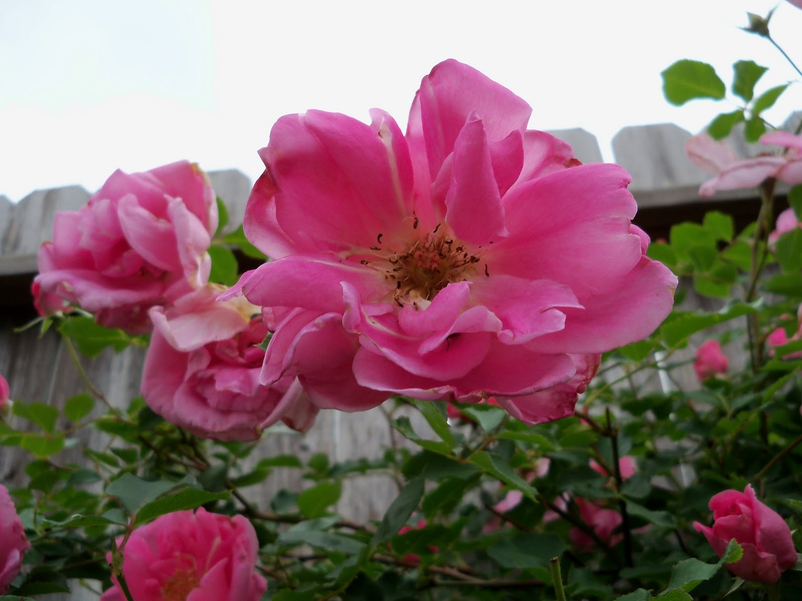 Gardening 2011 - 100_7438.JPG