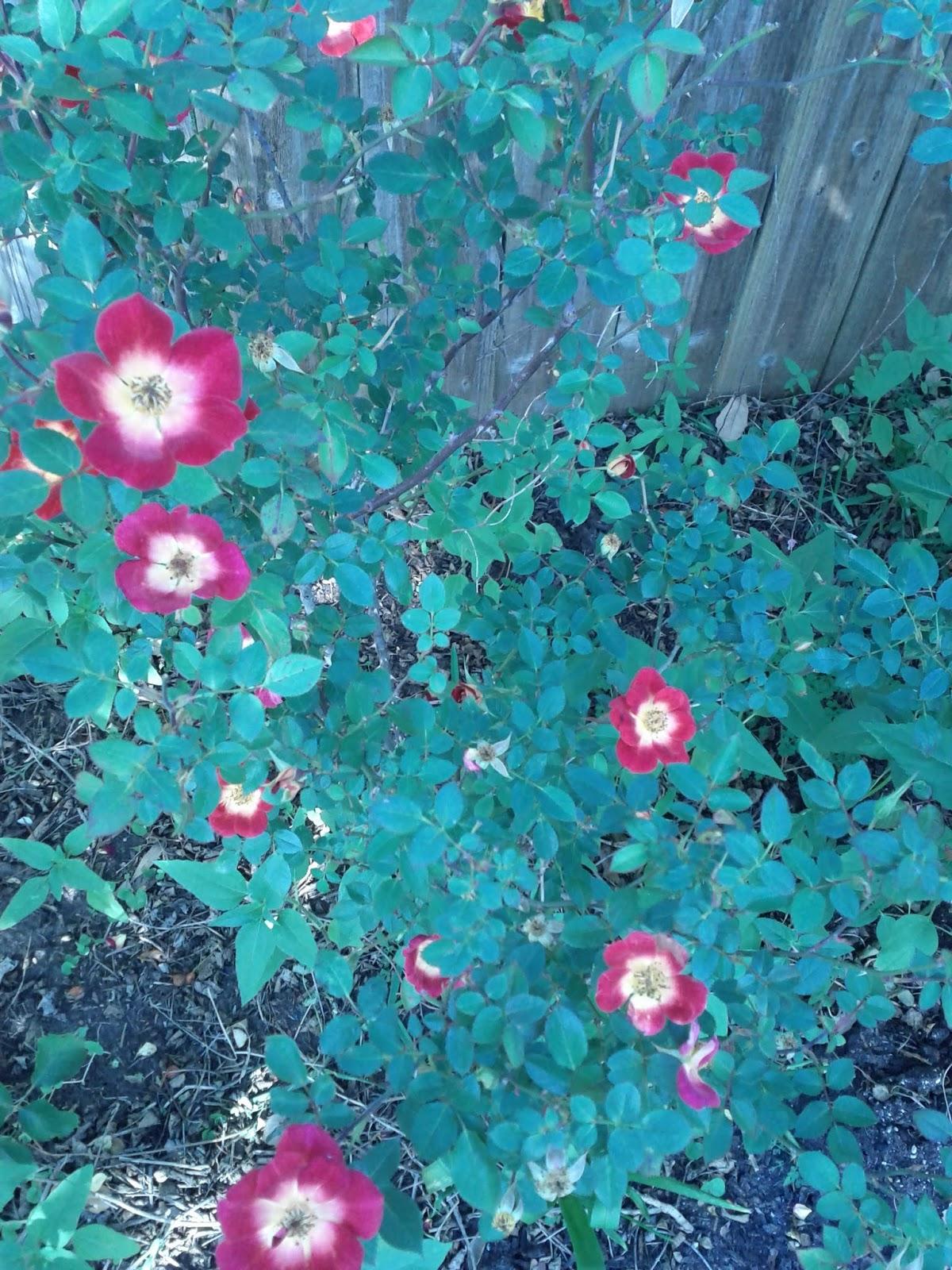 Gardening 2013 - IMG_20130318_162905.jpg