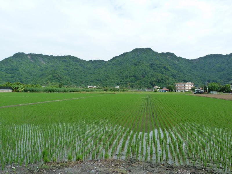Tainan County. De Meinong à Tainan en scooter. J 13 - vendredi%2B20%2B228.JPG