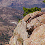 11-09-13 Wichita Mountains Wildlife Refuge - IMGP0374.JPG