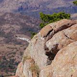 11-09-13 Wichita Mountains Wildlife Refuge - IMGP0374.JPG