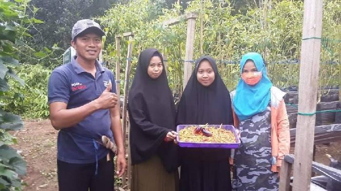 Diam-diam, walau berada di pelosok, warga di Desa Mangkalapi Kecamatan Kusan Hulu rupanya serius menerapkan anjuran pemerintah. Menerapkan ketahanan pangan dari pekarangan rumah tangga.