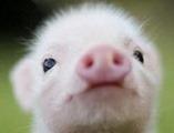 Cute-animals-C1