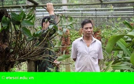 Hình 1: Thu 600 triệu đồng mỗi năm từ trồng lan