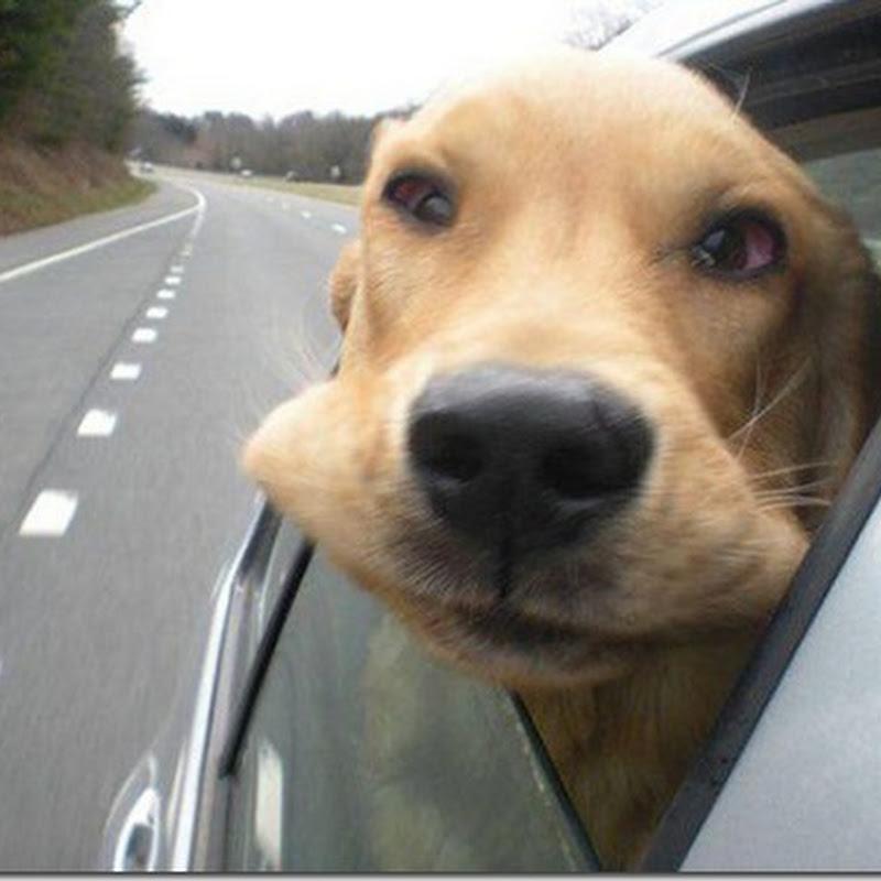 Fotos de perros en la ventanilla del coche