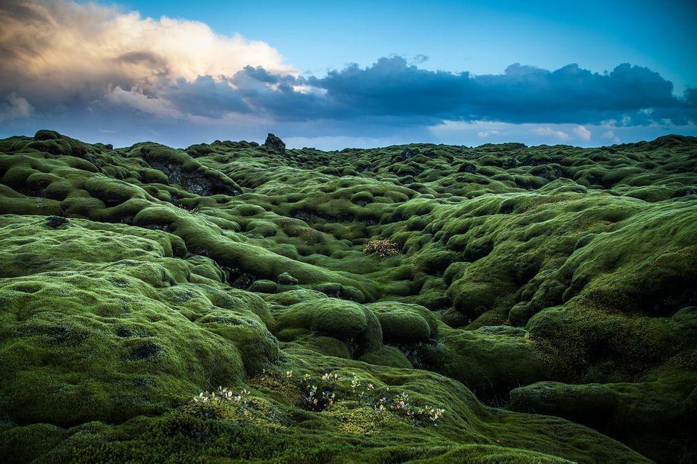 mossy-lava-fields-iceland-9